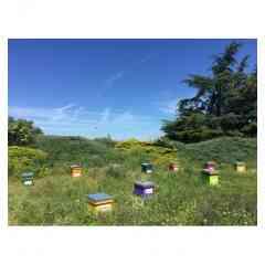 Adopter une ruche