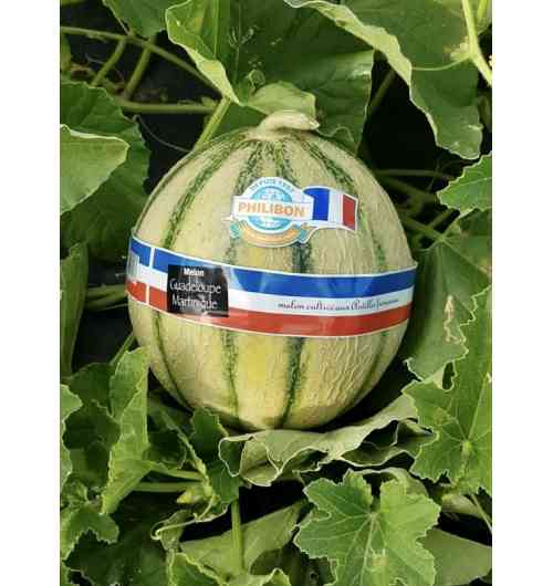 FRENCH CHARENTAIS MELON PHILIBON